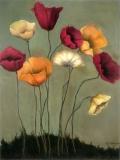 9 Poppies